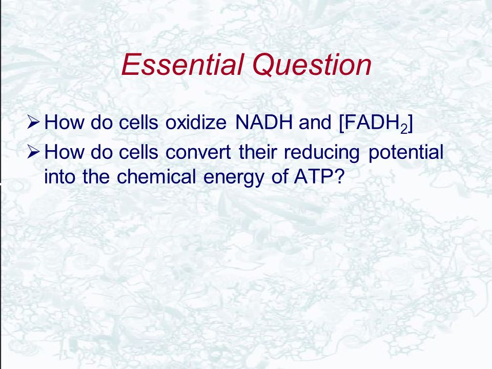 Essential Question How do cells oxidize NADH and [FADH2]